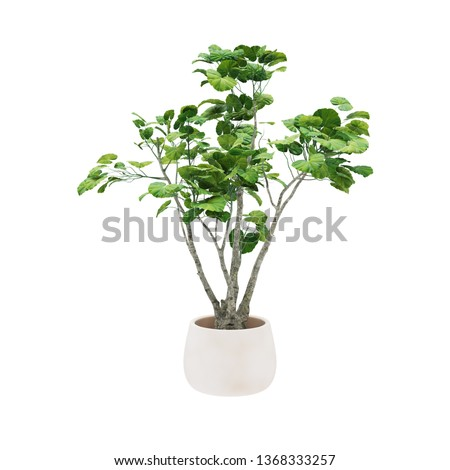 Decorative tree planted white ceramic pot isolated on white background.  #1368333257