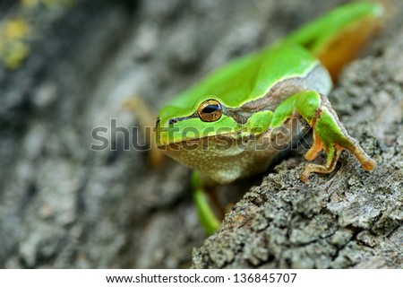 Tree frog on a branch in the spring #136845707
