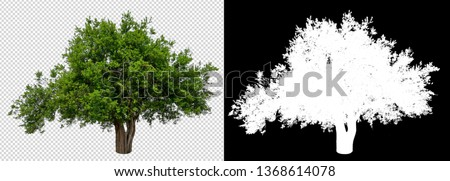 single tree with clipping path and alpha channel #1368614078