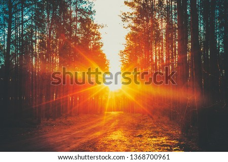 Forest Road Under Sunset Sunbeams. Lane Running Through The Autumn Deciduous Forest At Dawn Or Sunrise. Toned Instant Photo