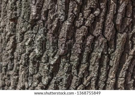 Wooden bark closeup #1368755849