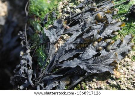 seaweed on rock #1368917126