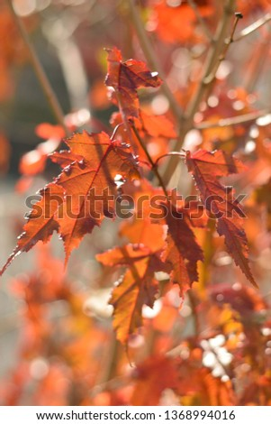 Autumn colors closeup #1368994016