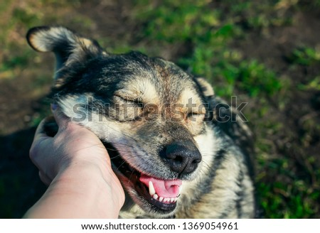 hand man trembling behind the ear cute dog closed his eyes with pleasure in the autumn Sunny Park #1369054961
