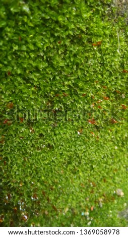 moss green fungus on the wall #1369058978