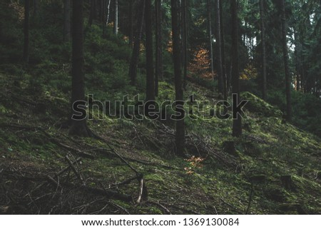 Dark mossy forest trees background. Mossy forest trees view. Autumn forest trees moss. Wilderness forest trees scene #1369130084