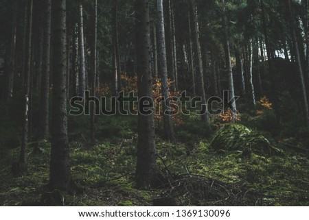 Dark mossy forest trees background. Mossy forest trees view. Autumn forest trees moss. Wilderness forest trees scene #1369130096