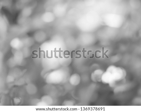 Abstract grey silver blur background, Bokeh gray from natural #1369378691