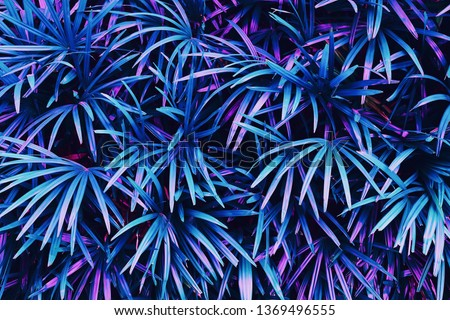 tropical leaves, exotic palm foliage, abstract natural pattern, colorful nature background, blue and purple toned process. #1369496555
