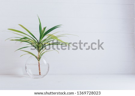 A branch of palm tree in a round glass vase on a white background. #1369728023