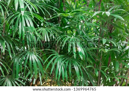 decorative green space of plants, spring tropical natural living background of leaves #1369964765