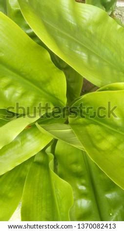 beautiful garden plant #1370082413