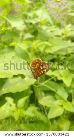 beautiful wild butterfly #1370083421