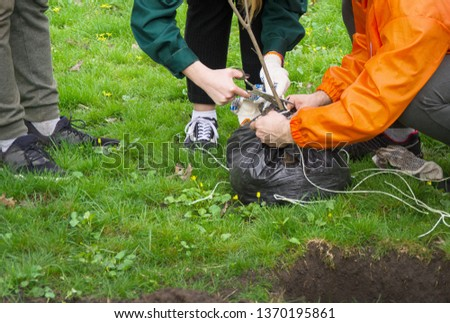 People are going to plant a tree in the Park and cut the ropes on the roots of the sapling #1370195861