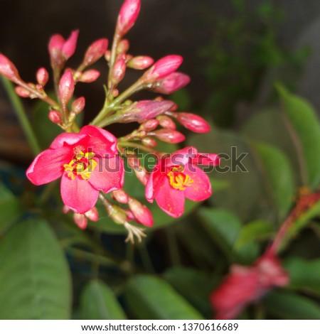 Beautiful & cute Red Flowers  #1370616689