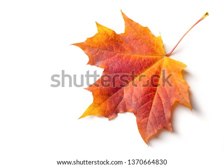 Autumn painting, Autumn maple leaves, Solitary leaf on white background, different colors. Yellow, red, burgundy, green, orange, Tree with wide, in most species, figured leaves. #1370664830