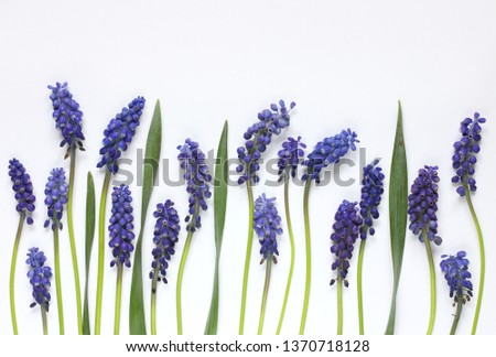 Blue flowers on white background  #1370718128