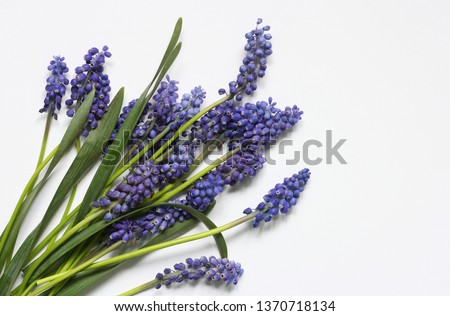 Blue flowers on white background  #1370718134