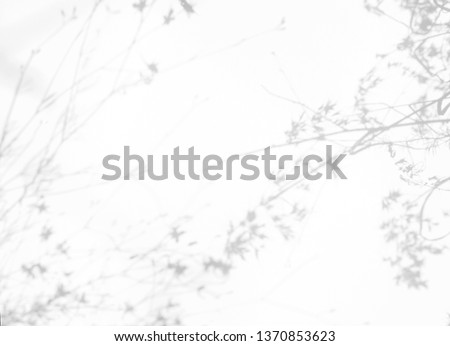 Gray shadows of the flowers and delicate grass on a white wall. Abstract neutral nature concept background #1370853623