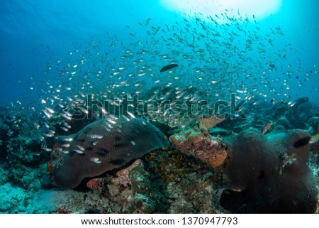 Tropical coral reef with variety of soft and hard corals #1370947793