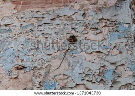 Close up of cracked paint, flaking off wall texture #1371043730