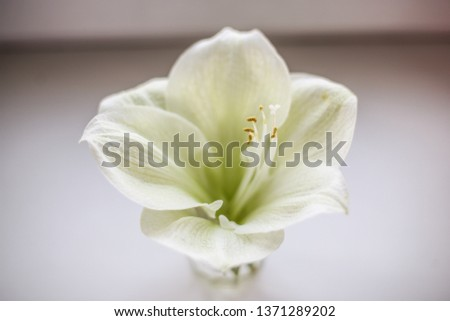 Single white flower #1371289202