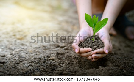 environment Earth Day In the hands of trees growing seedlings. Bokeh green Background Female hand holding tree on nature field grass Forest conservation concept #1371347045