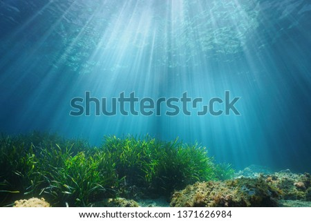 Natural sunlight underwater through water surface with seagrass and rock on the seabed, Mediterranean sea, France #1371626984