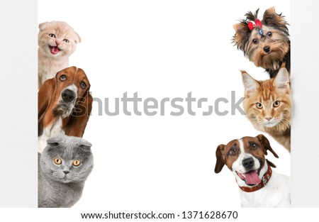 Various cats and dogs as frame isolated on white #1371628670