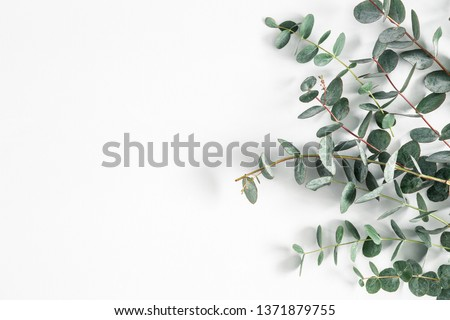 Eucalyptus leaves on white background. Frame made of eucalyptus branches. Flat lay, top view #1371879755