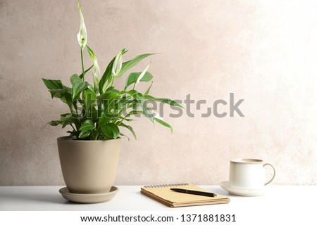 Composition with peace lily, notebook and cup on table against color wall. Space for text Royalty-Free Stock Photo #1371881831