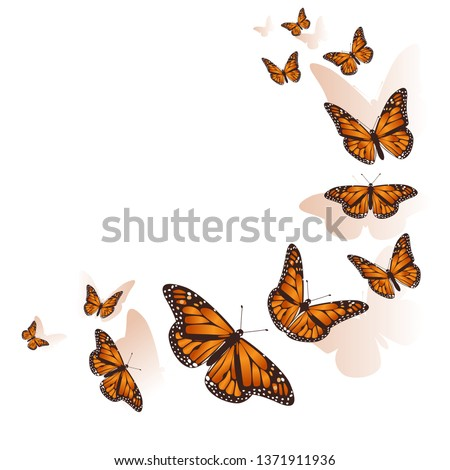 Beautiful butterfly background. Vector. #1371911936
