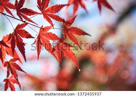 Autumn scenery in Japan #1372435937