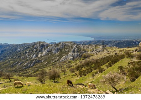 Adriatic coast: the Gulf of Manfredonia. ITALY (Apulia). Gargano promontory: panoramic view from Monte Sant'Angelo. Rural landscape with flock and pasture. #1372476269