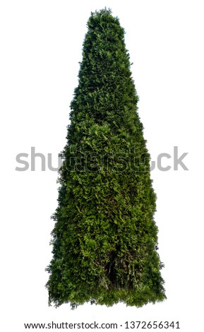Thuja occidentalis, also known as northern white-cedar or eastern arborvitae, is an evergreen coniferous tree, in the cypress family Cupressaceae, which is native to eastern Canada. #1372656341