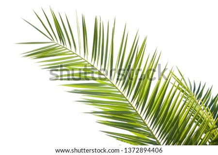 Beautiful close up tropical green palm leaf isolated on a white background #1372894406