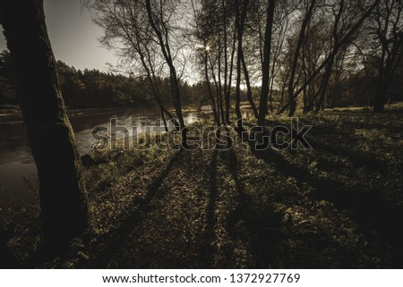 autumn in sunny day in park with distinct tree trunks and tourist trails, low sunlight and yellow colored leaves - vintage retro look #1372927769