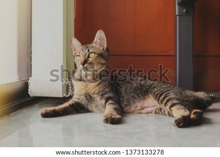 Cute stripes cat lay down on the floor and looking at something outside. #1373133278