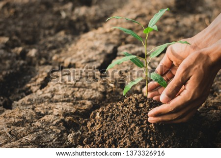 The seedlings are growing from the rich soil, Concept of global warming. #1373326916