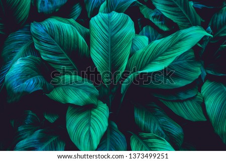 abstract green leaf texture, nature background, tropical leaf #1373499251