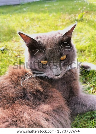 This is an image of a cat in the grass.