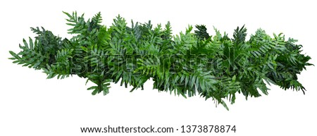 fern of Hawaii tree wall fence with stone planter isolated on white background for park or garden decorative #1373878874
