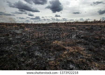 Scorched earth, spring fires. A field with burnt grass. The destruction of insects. Royalty-Free Stock Photo #1373922218