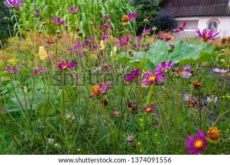 beautiful flowers on the field  #1374091556