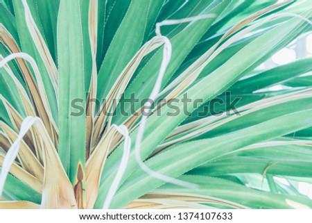 Beautiful tropical plants	 #1374107633
