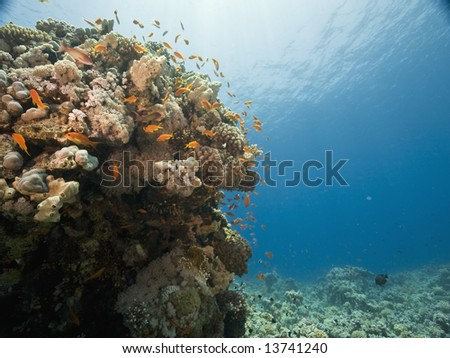 coral and fish #13741240