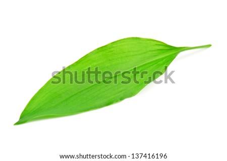 wild leek leaf on white #137416196