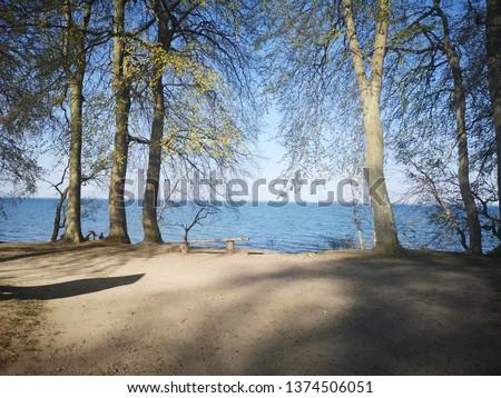 Sea and trees #1374506051
