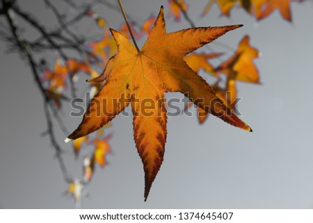 Leaves In Autumn #1374645407