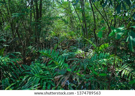 Sunlit tree canopy in tropical jungle #1374789563